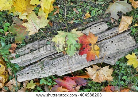 Abstract yellow and red forest maple leaves and rotten wooden plank  background - stock photo