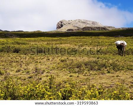 Abuna Yosef peak, Ethiopian Highlands near Lalibela - stock photo