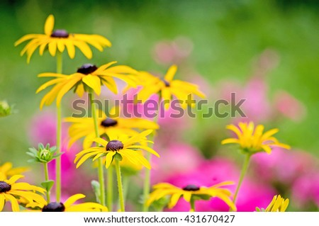 Abundance of blooming wild yellow and pink flowers on the meadow at summer time. - stock photo