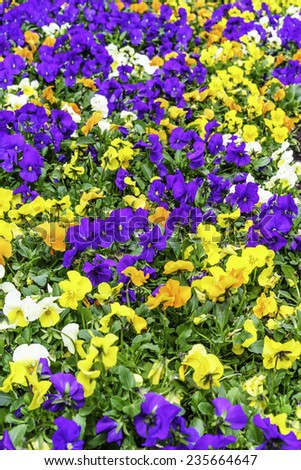 Abundance of floral color in spring garden, northern Illinois, USA (focus on middle ground) - stock photo