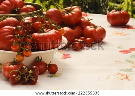 Abundant harvest of a variety of heirloom garden tomatoes - stock photo