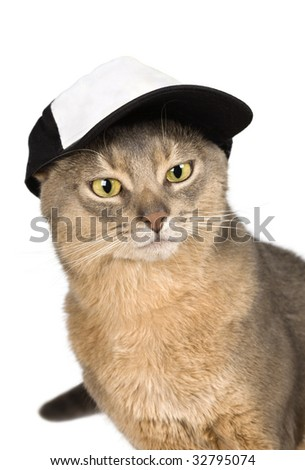 Abyssinian cat in baseball cap isolated on white - stock photo