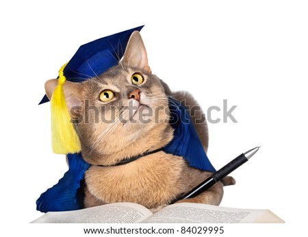 Abyssinian cat in graduation cap and gown with pen and book isolated on white - stock photo