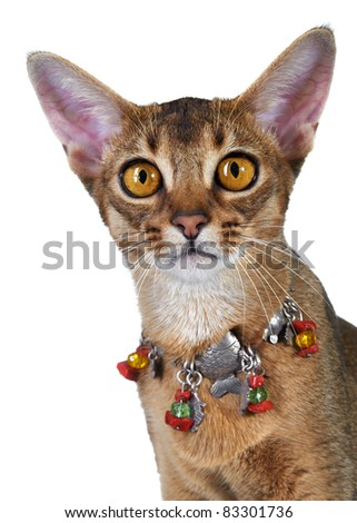 Abyssinian kitten. Age - 7 month - stock photo