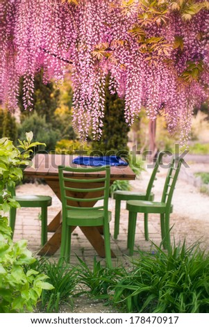 Acacia clusters hang down violet falls with green furniture in the garden - stock photo