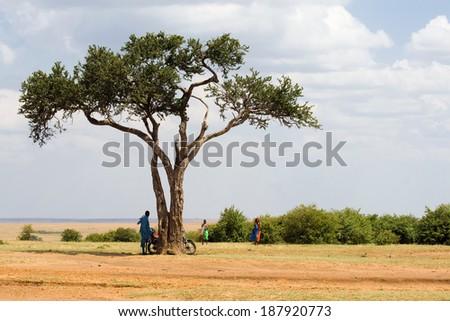 Acacia tree in Masai Mara National park, Kenya - stock photo