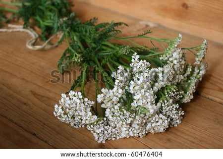 Achillea Millefolium - stock photo