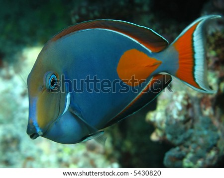 Achilles Tang School Achilles Tang Stock Photo