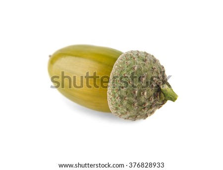 acorn are isolated on a white background - stock photo