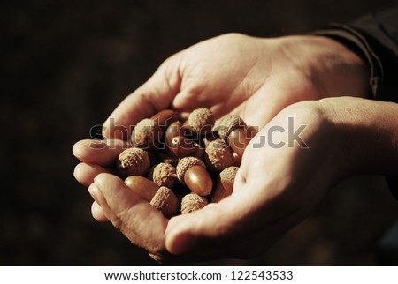 Acorn in the hands - stock photo