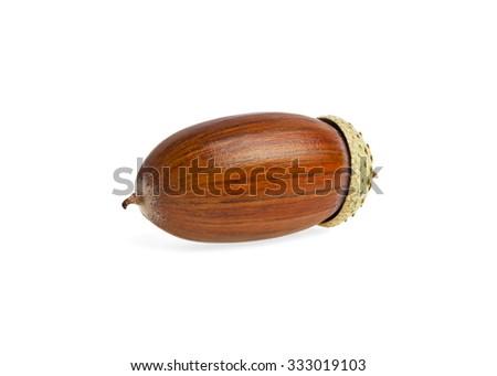 Acorn isolated on a white background - stock photo