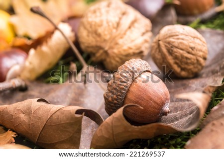 acorn nuts and dry leaves in autumn - stock photo