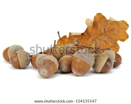 acorn on a white background        - stock photo