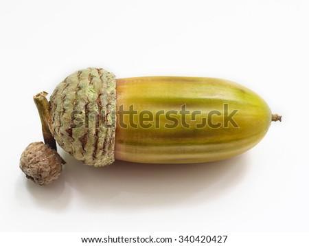 acorn on a white background. Isolated on white - stock photo
