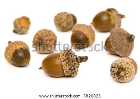 Acorns - stock photo