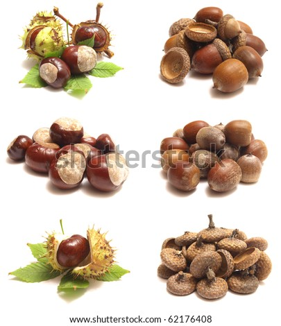 Acorns and chestnuts - stock photo