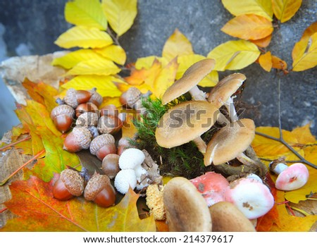 Acorns and mushrooms on colorful autumn foliage - stock photo