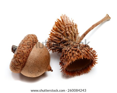 Acorns isolated on white background. Close-up view.  - stock photo