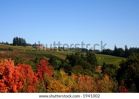 Acres of vineyards and winery visible  over the tops of autumn colored maple trees - stock photo