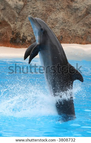 Acrobat dolphin jumping - stock photo