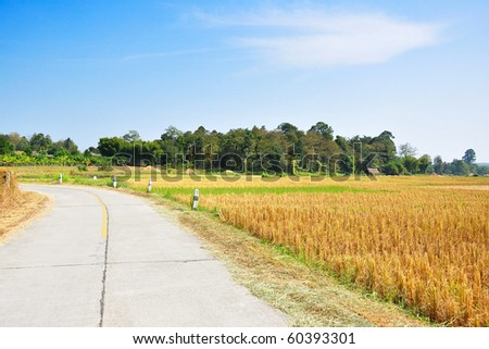 Across road through rice fields after harvest, In Northern Thailand. - stock photo