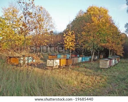Active Beehives - stock photo