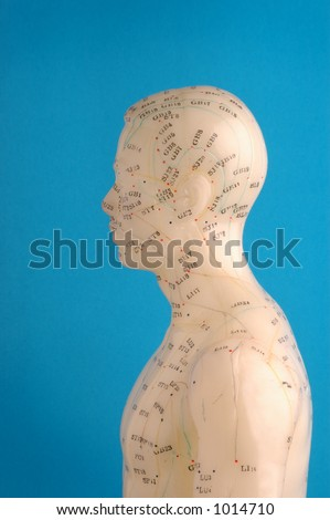 Acupuncture model head in profile, blue background. - stock photo