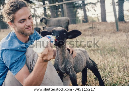 ADELAIDE, AUSTRALIA -  NOV 2014: french wwoofer Pierre on a farm feeding a young lamb. The Australian Government no longer allows voluntary work, such as wwoofing, to count towards a 2nd year visa. - stock photo