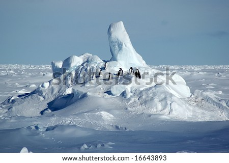 Adelie penguins on Antarctic pack ice - stock photo