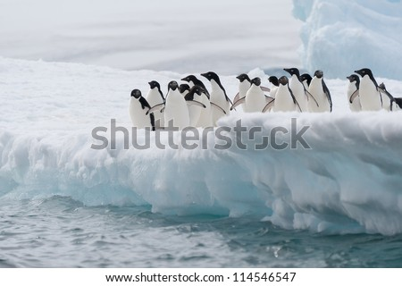 Adelie penguins on the iceberg in Antarctica - stock photo