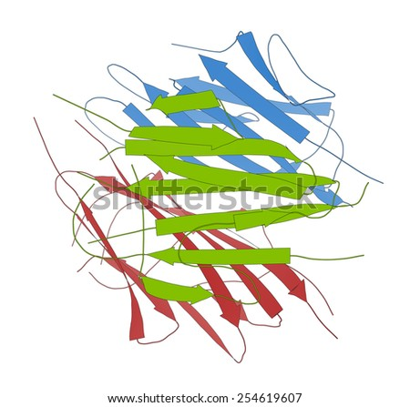 Adiponectin protein hormone. Plays role in regulation of metabolism. Protein cartoon model, per chain coloring.  - stock photo