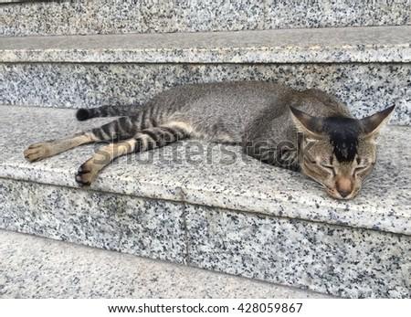 Adorable albino cat sleeping in the staircase. MRT Geylang,Singapore. - stock photo