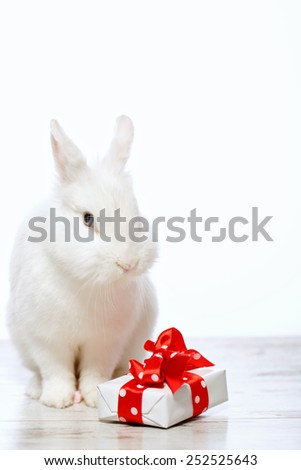 Adorable birthday gift. Closeup image of a cute white bunny sitting by the gift box with red ribbon isolated on white background with copy space - stock photo