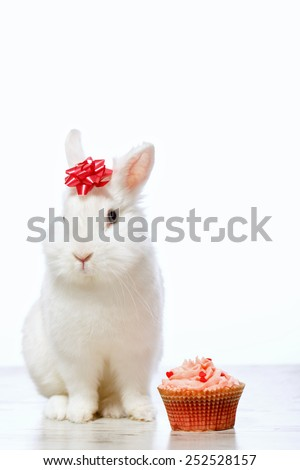 Adorable birthday gift. Closeup side view image of a cute white bunny with a ribbon on head sitting by the delicious cupcake isolated on white background with copy space - stock photo