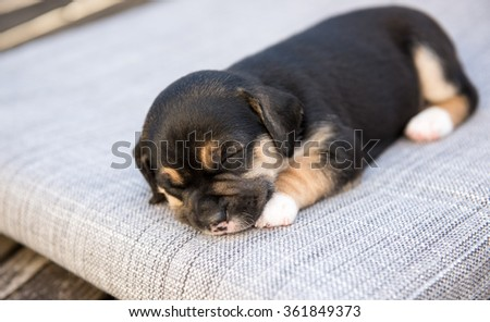 Adorable Black and Brown Puppy Sleeping Outside on Summer Day - stock photo