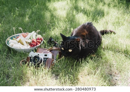 Adorable black cat lying outdoors next to the plate of fresh fruit and a vintage film camera - stock photo