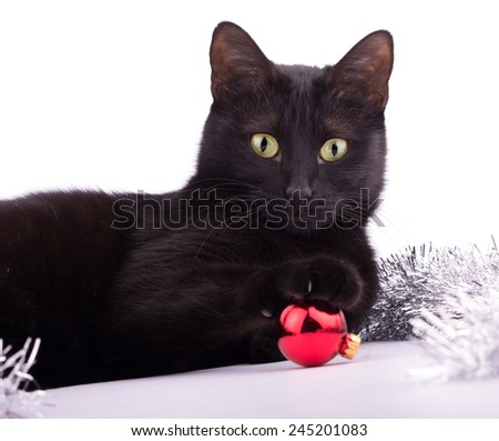 Adorable black cat with her paw on top of a red bauble; on white - stock photo
