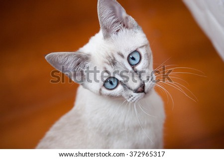 Adorable blue eyes cat with wooden background - stock photo