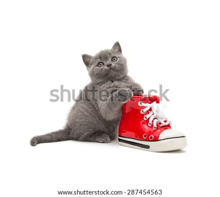 Adorable british little kitten posing on a white - stock photo