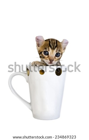 Adorable brown curl ear kitten in mug isolated on white - stock photo