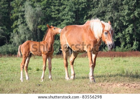 Adorable brown foal and his mother - stock photo