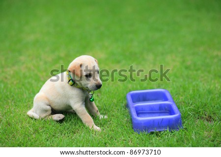 Adorable brown puppy is waiting for food at the grass field - stock photo