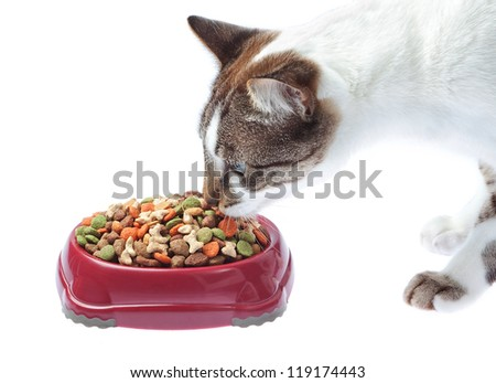 Adorable cat eats from a plate. Isolated on white. - stock photo