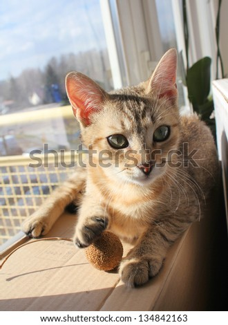 Adorable cat relaxing and playing in sun light at home - stock photo