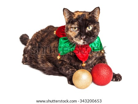 Adorable cat with orange and black fur wearing a Christmas elf collar next to two ornaments - stock photo