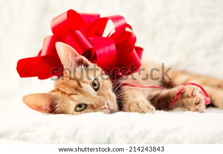 Adorable cat with red decorative bow - stock photo