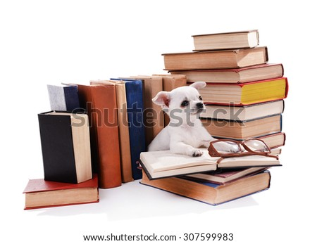Adorable chihuahua dog on heap of books isolated on white - stock photo