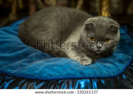 Adorable cute cat resting and staring ahead - stock photo
