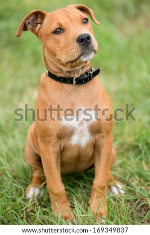 Adorable Dog - stock photo