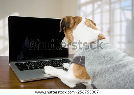 Adorable dog Jack Russell terrier works in the office at the computer. Licked. Black screen background you can place your information - stock photo